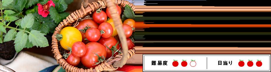 ミニトマトをベランダ菜園で収穫しよう! 家庭菜園で育てたい人気ナンバーワンの野菜といえば、断然ミニトマトですよね♪ 完熟したミニトマトの収穫は、自分で育てているならではの特権です。 今から始められる、ベランダでミニトマトを栽培するために必要なポイントを各ステップごとに詳しくご紹介します!