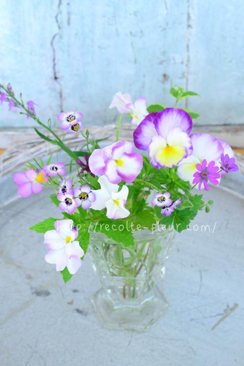ギリア・トリコロール、ビオラ、ゲラニウム、ハーブ・・・春から初夏の草花の花あしらい
