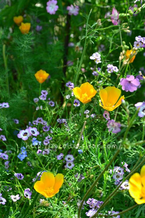 5月は春苗から夏苗の交換時期。最後は生けて楽しんでみませんか?