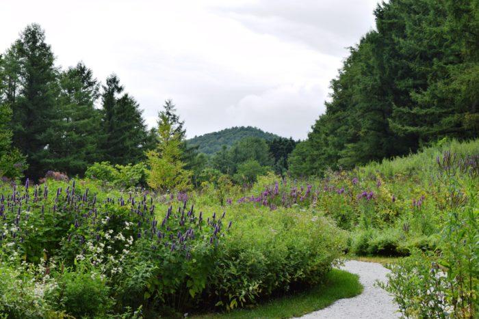 野の花の散歩道  2017年にオープンしたエリア「野の花の散歩道」は北海道の山野でよく見られる野草や園芸種、種で増えた野の花が絶妙なバランスで咲き乱れる、まるで野原を歩いているかのような庭です。   この「風のガーデン」のデザインを手掛けたのは、北海道のガーデンを牽引する上野ファームのヘッドガーデナー上野砂由紀さんなんですよ。