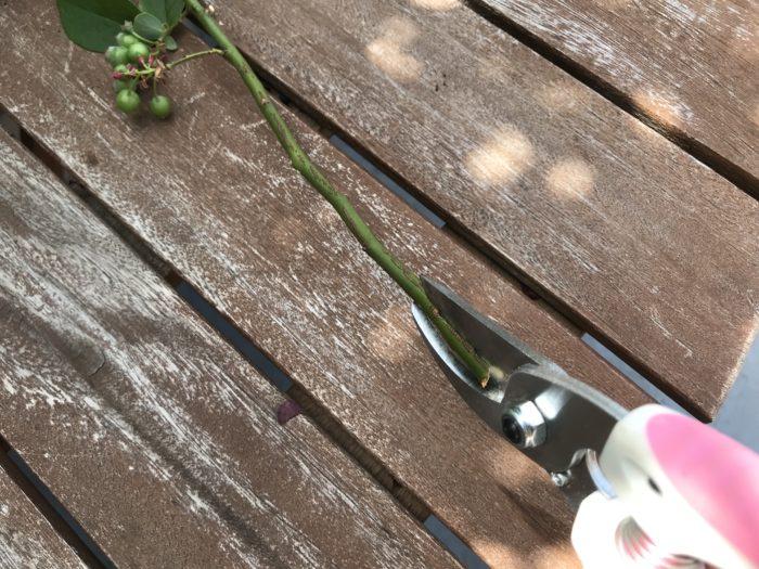 枝ははさみで割く様に切り込みを入れましょう。  水が吸いやすくなります。