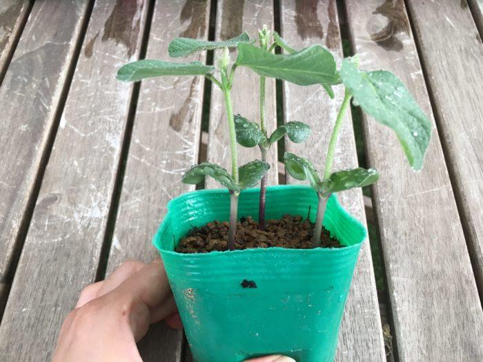 枝豆 プランター サイズ