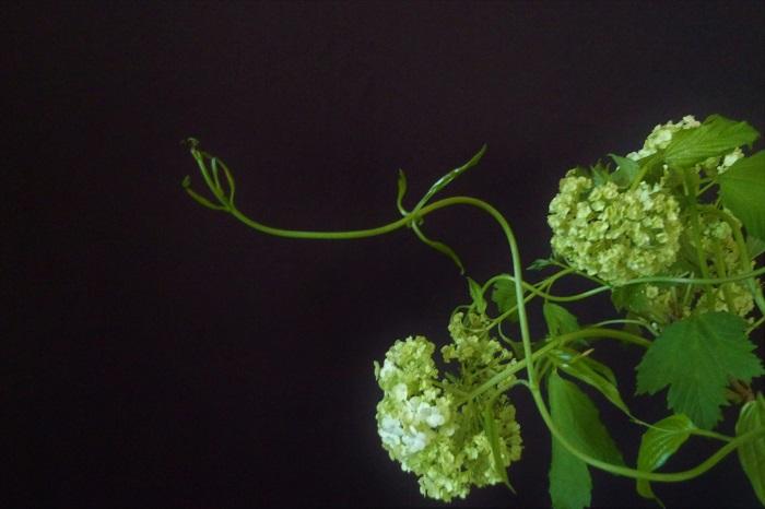 花束やアレンジメントの主役はやっぱりお花ですよね。お花はその鮮やかさでストレートに目に飛び込んでくる美しさがあります。でも、日頃お花の脇役になりがちなグリーン(葉物)たちをちょっと気にして見てみませんか。 簡単に「グリーン」や「葉物」なんて言葉で一括りにしてしまうのは勿体ない!グリーンにも濃淡や色の明暗、軽やかさ、強さ、儚げな感じ、安定感など、いろんな個性があるんです。それぞれの持ち味を活かしてあげられると、グリーンだけで素敵な花束が出来ます。ずっと眺めていたくなるような、野原そのものを手で包み込んでいるようなグリーンを束ねてみませんか。