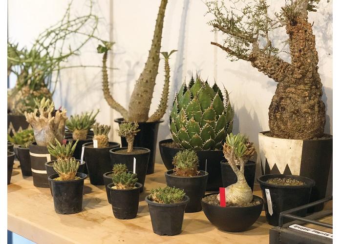 Botanize Shirokane