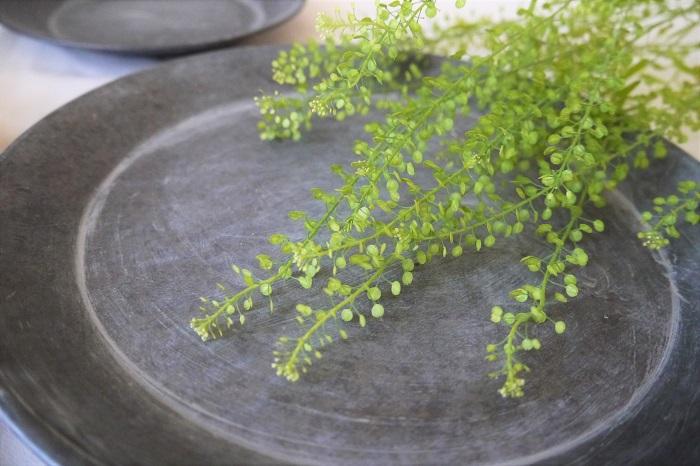 学名:Thlaspi arvense  科名:アブラナ科  分類:越年草  ナズナは先端が花で、茎に沿って生えている丸みを帯びたものは、葉ではなく種子です。葉は茎のもっと下の方についています。先端の花は白の小花か、蕾の状態であることが多く、ツブツブとした果実のようにも見えます。 花も種子もすべてが小作りで華奢な印象が強く、ふわりと空間を纏っているようなその雰囲気はロマンティックな要素の強いグリーンです。全体の雰囲気を甘く柔らかくしたいときにおすすめのグリーンです。