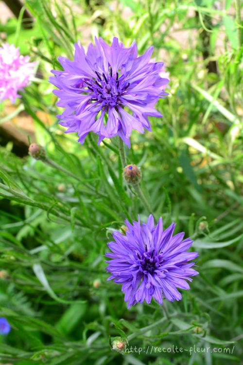 最近は、ブルー、ピンク、白の定番カラーの他、紫、アイスブルー、黒花などダークカラー、複色など色も豊富です。