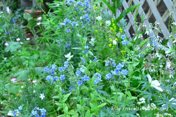 花の咲き方はバラのような丸い花もあれば、穂状に咲くものなど、様々な咲き方があります。花の大きさも大輪から小輪まで様々なので、育てているバラに合わせて好みの咲き方と花のサイズの草花を選びましょう。