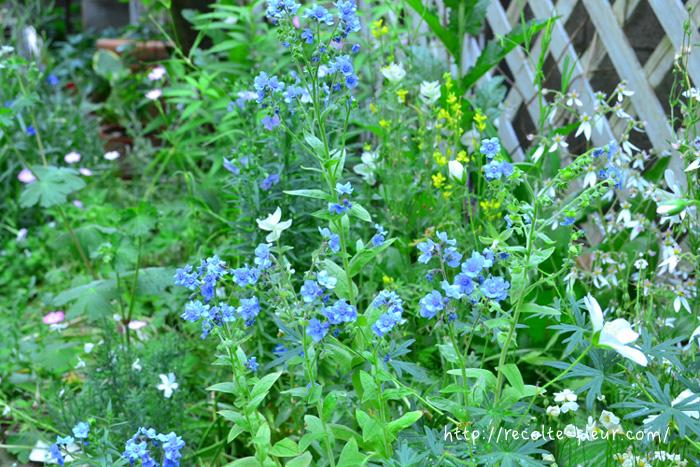 5月半ばになったとたん、次の季節を予感させる湿気がやってきました。今年はいつもより春の気温が数℃は高かったので草花の開花が軒並み早いようです。本格的な苗のチェンジの時期ですね。まだまだご紹介しきれなかった植物は次回に。