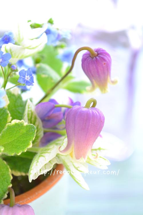 壺型のクレマチスとハーブの花あしらい