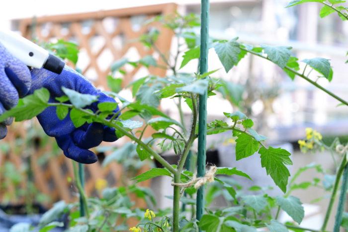 濃い濃度で使用すると、微生物が全て死滅したり、植物が逆に傷んでしまいます。  夏の暑い時間帯などに霧吹きで吹き付けてしまうと、熱で水分が蒸発し、濃度が上がってしまうことがあります。涼しい朝や夕方に行うようにしましょぅ。