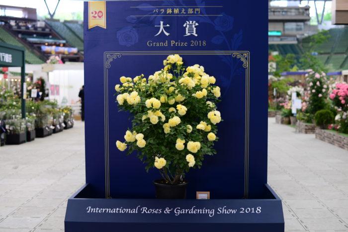 2018年、鉢植え部門の大賞