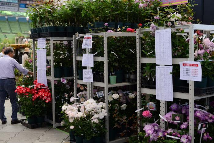 日本バラ会では、現在会員が5oo名程いらっしゃるそうで、ここでは世界で一つしかない会員の方々が品種改良を試みたバラが販売されています。  盆栽したてのバラや苔に植えられたばら、新種の苗、58種がここでしか買えないバラ達が集合しています。
