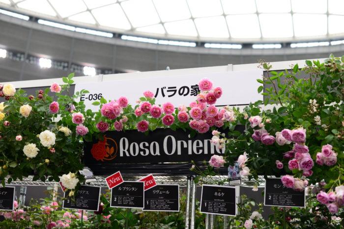 フラワーマーケットストリートでは、生産者さんが選りすぐりのバラを販売しています。  今回はRosa Orientisさんにお話しを伺いました。  Rosa Orientis さんのバラは、江戸幕末から続く農家として、現在はバラの栽培に従事されていらっしゃいます。  より育てやすく丈夫で美しいばら作りに力をそそぎ、ブースに並ぶバラ達も力強く可憐で美しいバラ達が印象的でした。