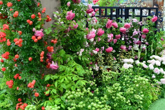 ブリッジゲートをくぐると100万輪のバラの世界へ。  それぞれ個性豊かで華やかなバラたちですが、互いに引き立て合う植え込み方が参考になるエリアです。  ここでは、人気ガーデナーの吉谷桂子氏とマークチャップマン氏が作られた20周年を祝い20周年に捧げるガーデンを披露しています。優しく暮らしに寄り添うようなガーデンが魅力的です。