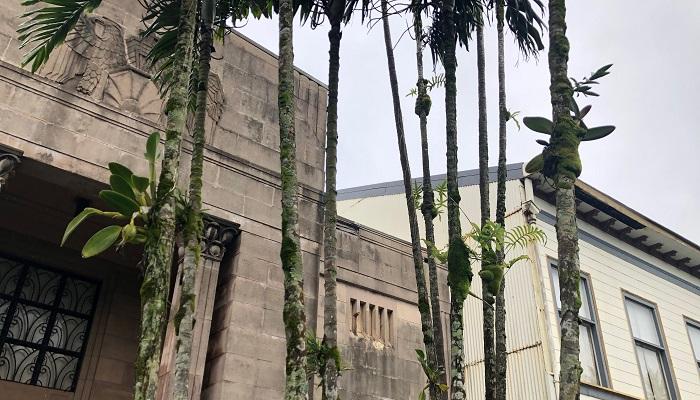 今回行った植物園があるのは、雨の多いヒロの近くで、観葉植物が生い茂る環境です。ヒロの海岸沿いにあるPacific Tsunami Museum(太平洋津波博物館)の前にはヤシに着生した蘭がたくさんありました。