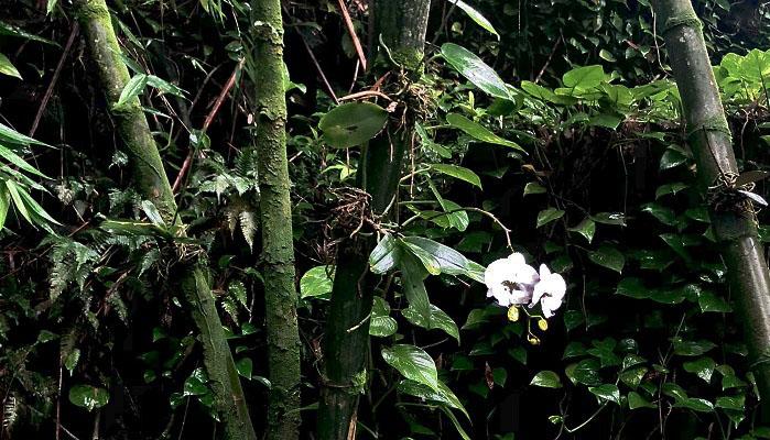 竹も湿気で苔むしており、さらに蘭も着生しているなど・・・