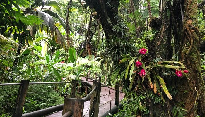 樹木に着生しているサボテンは花がボンボンついていました!