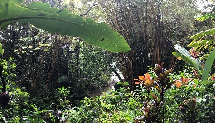 観葉植物・ヤシ類はもちろん、竹籔が随所にあったのがすごく良かったです。川が河口に向かっていく横に竹がたくさんあります。