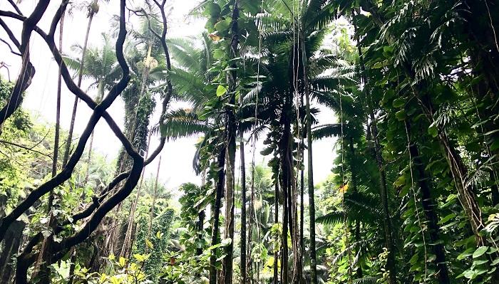 まずはボードウォーク沿いにある竹や大木、それに着生している蘭やサボテン。
