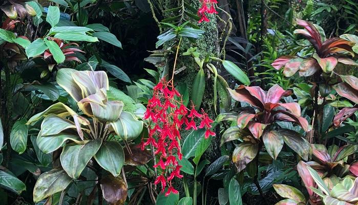 真っ赤な踊り子のような蘭です。他の種類も着生しています。