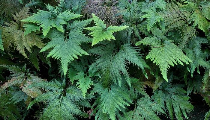 気候がこれだけ異なるので、それぞれの場所で育っている植物も全く違ってきます。