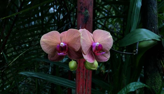 蘭のエリアもありました。植物園内で蘭はいたるところに着生しており、色の濃い観葉植物の葉の中にハッとするような鮮やかな花をたたえ、優雅に下がっていました。オーキッドガーデンではさまざまな蘭が集められ、ひときわ鮮やかなコーナーとなっていました。