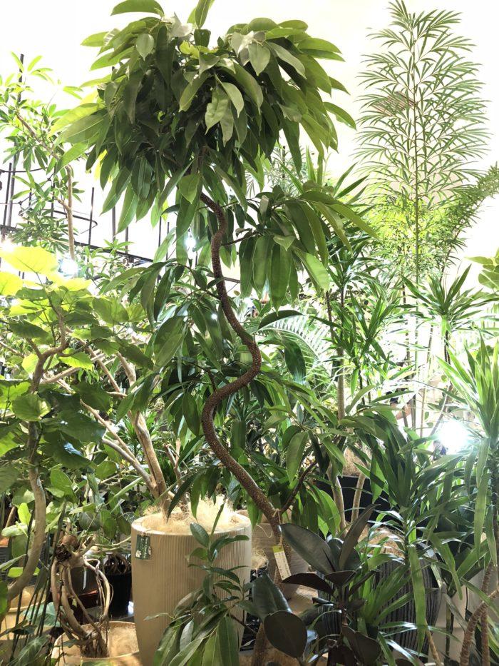 「生産者とのつながりもSea Gardenの強みの一つだと私自身は思っています。」という溝向さん。 溝向さんが生産者の方と確かな信頼を築いてきたからこそ譲ってもらえる植物たちもあるのだとか。
