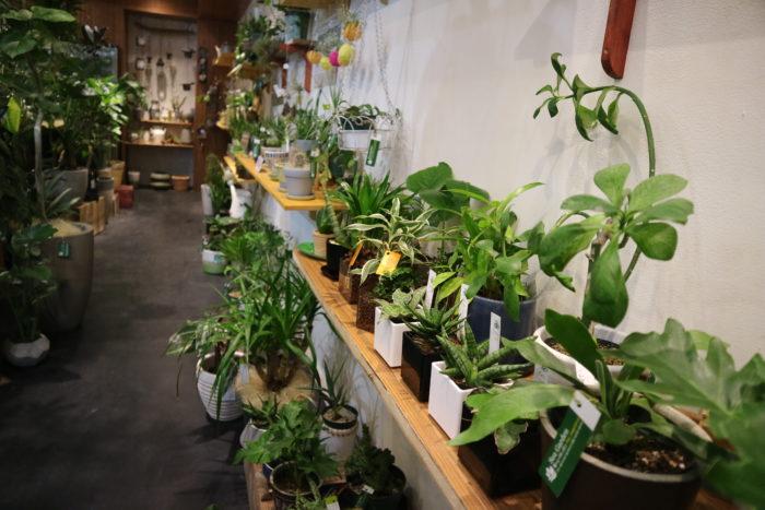 店内の植物の様子です。  ひと鉢、ひと鉢、丁寧に、そして緻密に管理された植物は美しく、健康そのものです。 これもすべて、スタッフの方たちが細やかに、そして愛情をもって管理している証拠。