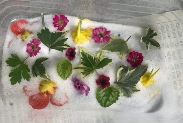 必要であれば花をカットしたり、キッチンペーパーで水分を拭き取りながら花同士が重ならないようにシリカゲルの上に並べます。