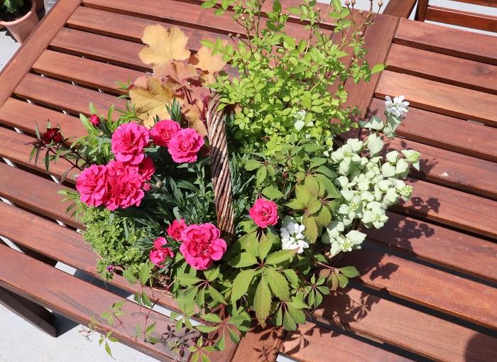 植え替えから10日後には、ナデシコが勢いよく咲きました。ラミウムの白い花も咲き、姫バラのつぼみもふくらみ始めています。植え替え成功です!