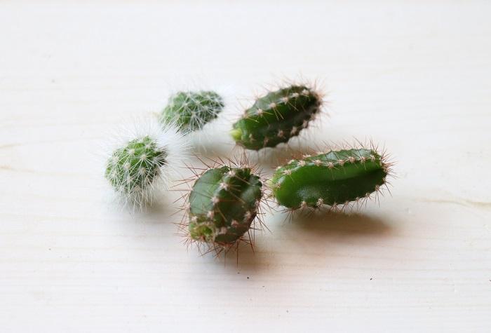 親株から外した茎は、そのまま1~2日置いて切り口を乾かすか、切り口に「切り口保護・発根促進」を促す専用の園芸用薬品を粉衣します。