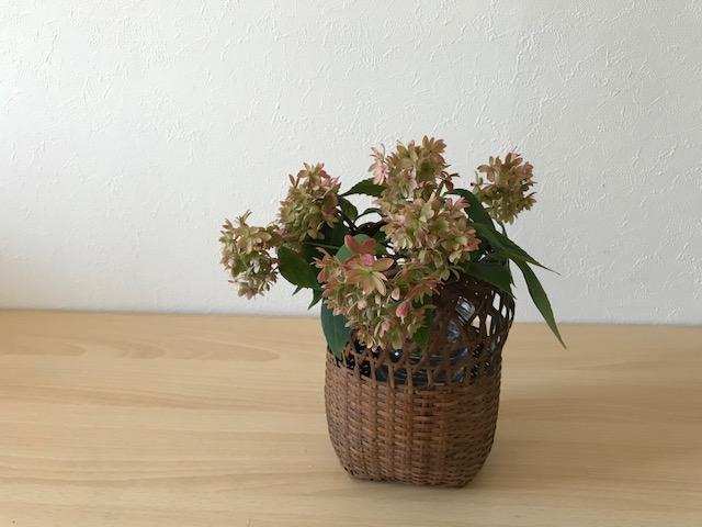 今回は、はじめに山紫陽花の位置を決めます。  ヤマアジサイから生ける理由は今回の6種類の草花達の中で一番ボリュームがあり面積を使う花なので、今回の中心となる植物から生けます。