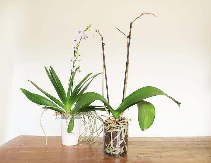 バスケットに植え込む前にまずは下準備を。花が終わっている場合は茎をカットします。