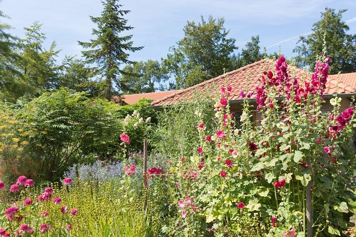 タチアオイ(立葵)は縦にまっすぐ茎を伸ばし、たくさんの花をつけます。こぼれ種でも発芽しやすく、丈夫な植物です。タチアオイ(立葵)は背が高くなるイメージがありますが、草丈の低い種類もあり、花壇などにも利用されやすい植物です。大きくなるものは、2m以上にもなり、背丈にかなり大きさの差があります。このように茎の長さが立った人の背丈を超えるほどよく伸びるからこの名前がつけられたともいわれています。大きいものは支柱を立てておかないと、少しの風でも倒れてしまいます。