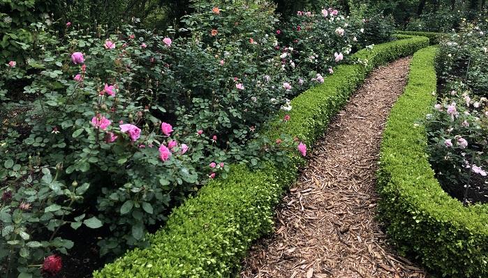 背の低いツゲの生垣に囲われてて香りのよいバラたちが植えられていました。香りの系統ごとにわけられて植えてあるスペースもあります。