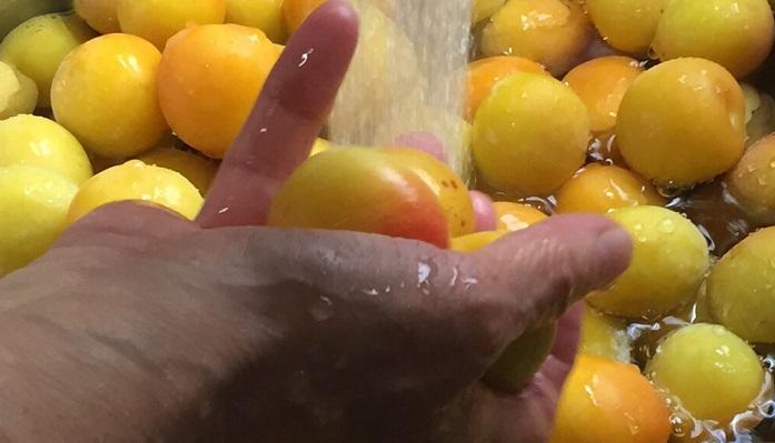水洗いします。完熟梅は水につけなくても大丈夫。また、もし落ちた梅を拾う場合は、虫が入っている場合があるためしばらく水につけておきましょう。1時間もつけておけば虫が出てしまいます。