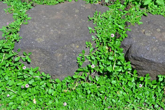 土をむき出しにしているよりは、こだわったグランドカバーを植栽すると、お庭の見た目がランクアップしておしゃれな空間に。植物だけでなくレンガや石などと組み合わせるのも一つの手です。  また、一種類の植物だけでなく複数の植物を組み合わせたグランドカバーにすると、緑のグラデーションがとても美しい空間になります。基本的には常緑の強いグランドカバーを選びつつ隙間に毎年違う一年草を植えこんで毎年少しずつ色合わせを変えてみるのもおすすめ!うまく根付けば花の咲く頃は花のカーペットのような美しい光景になるはずです。