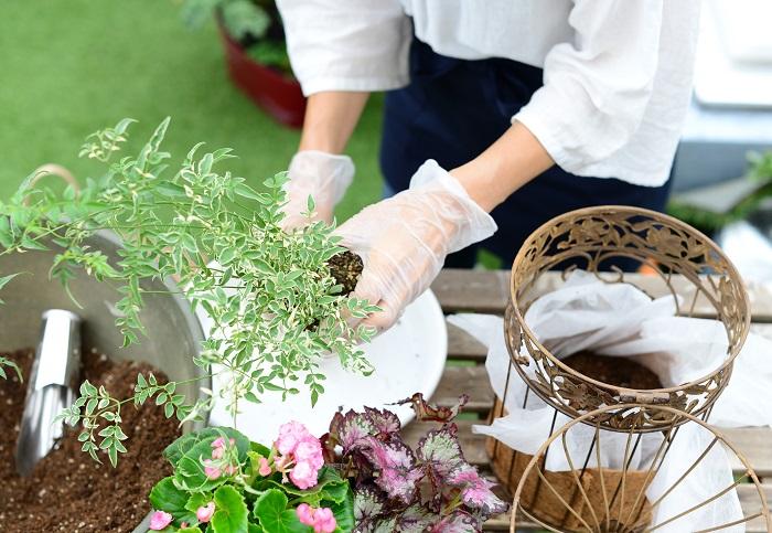 後ろ側に配置するハゴロモジャスミンから植えていきます。株元の黄色い葉やごみを取り除き、根を少しくずして土の部分をコンパクトにします。根っこをいじめすぎいないように注意しましょう。