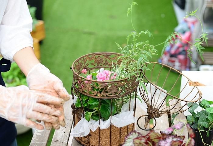 限られたスペースに植えるため、葉っぱが多すぎる場合は数枚取り除きましょう。 葉を数枚取ることで、見た目も風通しも良くなります。