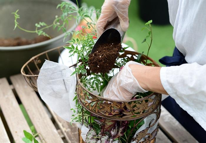 隙間にしっかりと土を入れます。 鳥かごの外側から不織布をピンと引っ張って、不織布の上から土を滑り込ませるようにすると土が入れやすいです。 器の真ん中の苗と苗の間にも土を入れましょう。