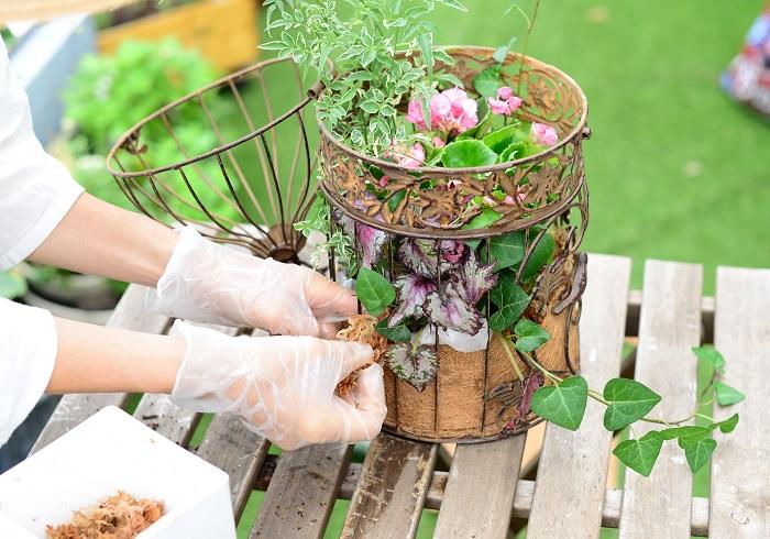 不織布を隠すように、鳥かごの外側一周に水苔をはります。