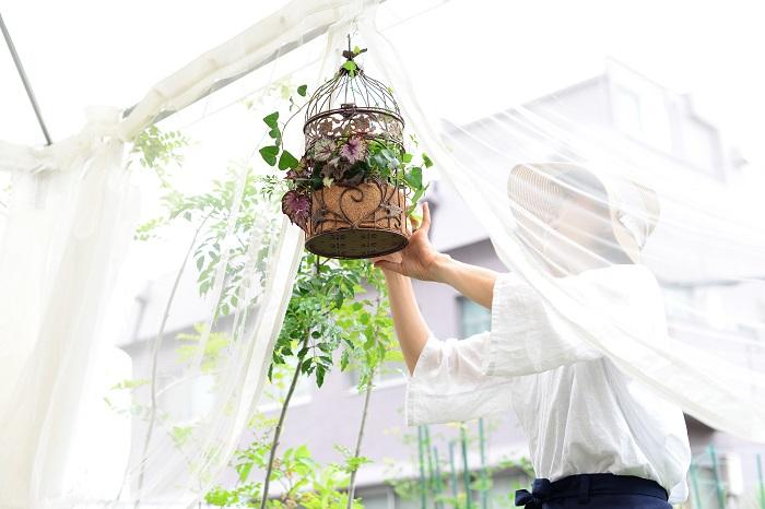 鳥かごという狭いスペースの中に植物を植えることは、植物にとってはちょっと窮屈かもしれません。人間もおしゃれをするには少し大変なことがつきものですが、植物もおしゃれに飾られる時には少し無理をしています。そのため、日々植物の状態をよく観察してあげることが必要です。  置く場所 直接雨があたらない日なた~半日陰に置きます。 玄関などの軒下やベランダ、常緑樹やパラソルの下などが適しています。  肥料 肥料入り培養土を使うので、1カ月後から水やりをかねて液肥や固形肥料を与えます。  花柄とり ベゴニアの花は花が終わると自然に落ちますが、葉の上に落ちたものは見た目も悪く、病害虫の発生も促すためこまめに取ります。  切り戻し 生長して姿が乱れた場合は茎を短くし、再び美しく楽しむことができます。切り戻しに合わせて薄めの液肥を施すと、新芽の生長がよくなります。  水やり 暑い季節は、朝または夕方以降涼しい時間に水をあげましょう。日中暑い時間の水やりは蒸れてしまうのでおすすめしません。また、雨の日や土が湿っている時は控えます。