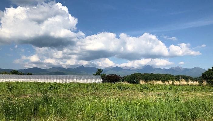 夏は雲の変化が大きい季節です。四季を通して空にできる雲の種類は実は一定で、高さや地上から巻き上がるホコリなどの影響で見えにくくなる雲が有ったりはします。夏は特に上昇気流が発達しやすく、そういったホコリが舞い上がりやすため、低い位置から上空に伸びるようにできる積乱雲(入道雲)は見えやすいのですが上空に薄く広がる巻雲などは見えにくい、とされています。  夏雲の 湧きてさだまる 心あり  中村汀女  夏雲が空にわいてくる様を見ながら、なにか心が決まった、これだ、と定まった。夏雲の力強さが後押ししたような状況でしょうか。  父のごとき 夏雲立てり 津山なり 西東三鬼  津山は三鬼の出身地である岡山県津山市のこと。夏の空にむくむくと立ち上っていく雲に6歳のころ亡くなった自分の父の面影を見たのでしょうか。晩年の句集「変身」に編されたこの句を詠んだとき三鬼は移住した神奈川県のは山にいたので、いつか見た津山の夏雲のことでしょうか。