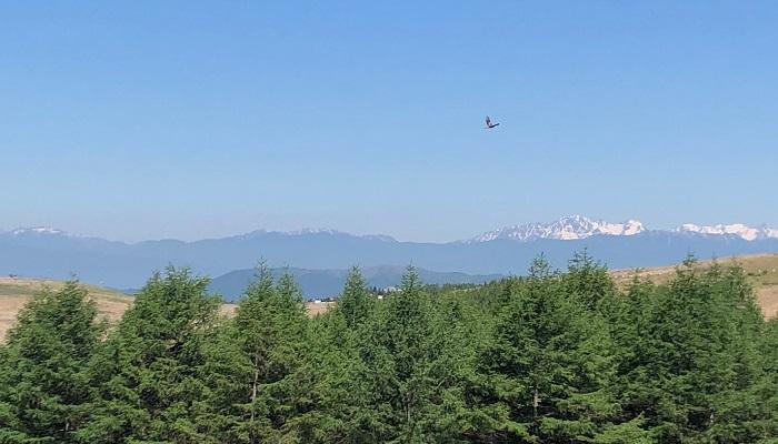 高い山々の谷間や斜面などに残る、雪のこと。夏でも雪筋が見えるさまを言います。  雪渓を あおげばそこに 天せまる 水原秋桜子  夏でも雪が起こっているくらい高い山を仰げばすぐそこまで天が、空がせまっている。そんな素直な句です。