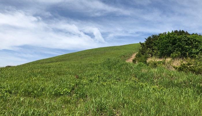 一か月ぶりに車山高原に行ったらきれいに若草が生えそろっていました。