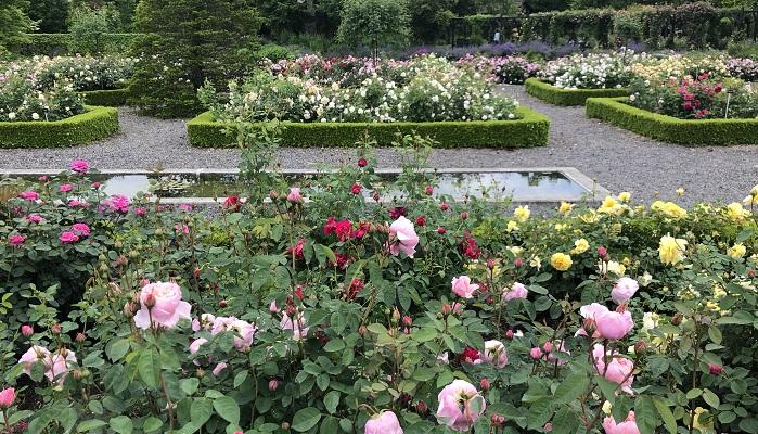 中央にはプールが配置され、色とりどりのバラが均一に刈り込まれた背の低い生け垣で囲われています。