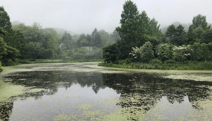 人工池とは思えない自然な池。ちょうど霧が出てきてまさに幽玄・・・といった雰囲気です。