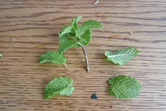 他の葉も同じように下の葉は取り除いてから作ります。ミントやユーカリは真上から見ると花のような形をしているので大きめの隙間を埋めるのに役に立ちます。