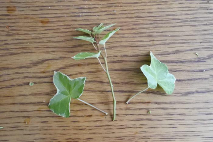 葉もので隙間を埋めていきましょう。  下の方の葉は取り除きます。アイビーなどのツルものは飛び出るように挿すと動きを出せます。取った葉も足元の隙間を埋めるのに使えますよ。