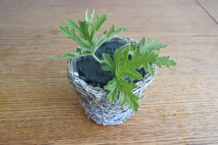 めに下に敷くグリーンを挿します。短くて軽い葉ものは2~3センチ挿せばいればOKです。
